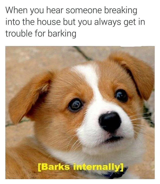 When you hear someone breaking into the house but you always get in trouble for barking - meme