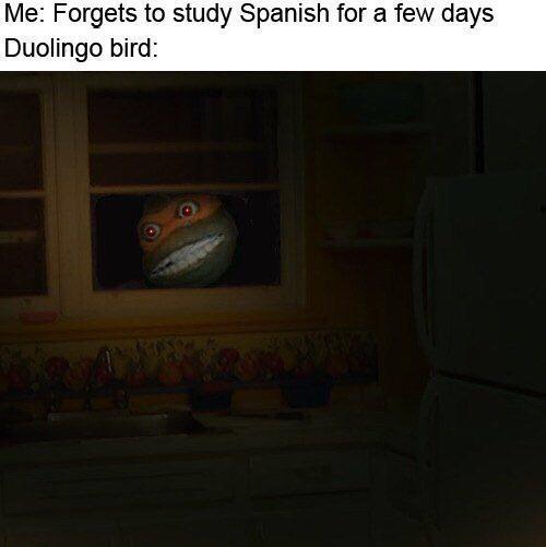 Cacti penis - meme