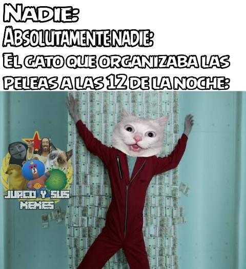 Gato memes
