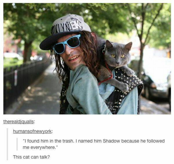 cat people - meme