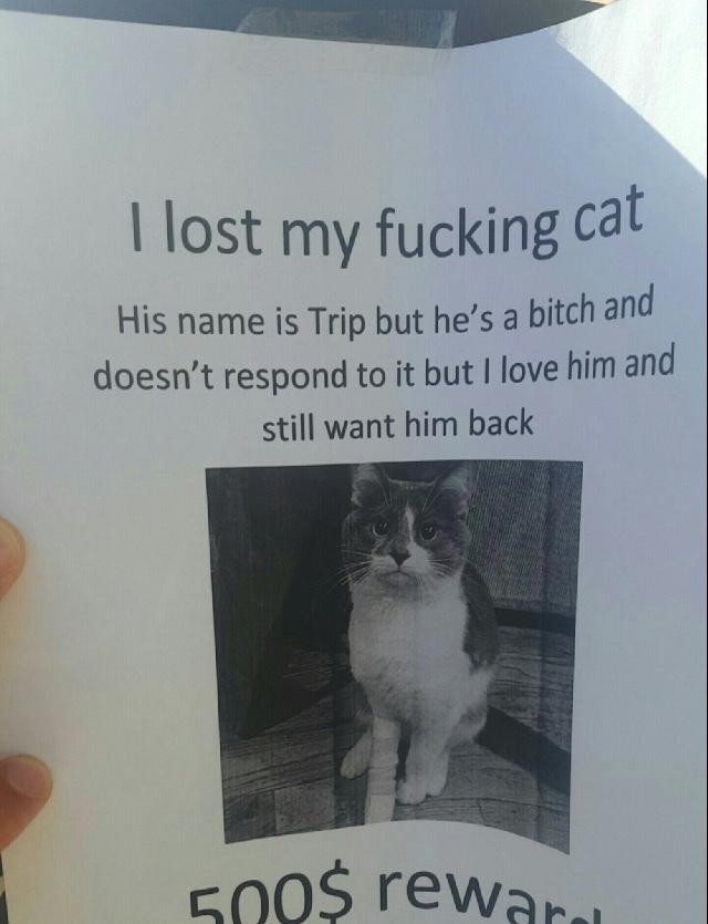 Find his cat - meme