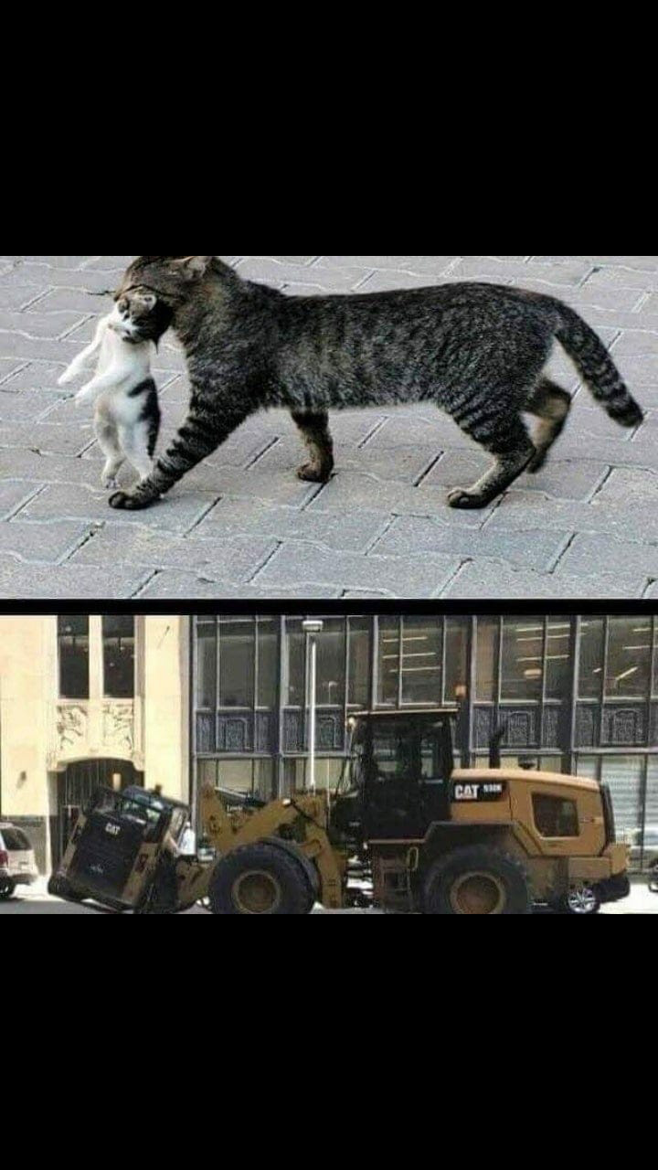 Cat lifting a cat - meme