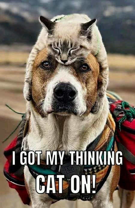 Dog used thinking cat. Dogs IQ rose by 200 - meme