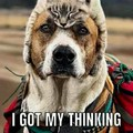 Dog used thinking cat. Dogs IQ rose by 200