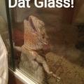 #Just lizard things... ♡