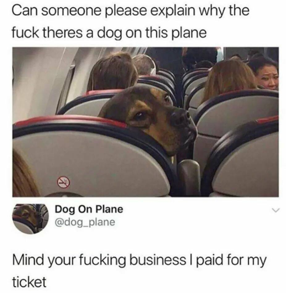Dog on a plane - meme
