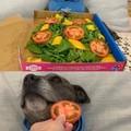 Dog de dono vegano