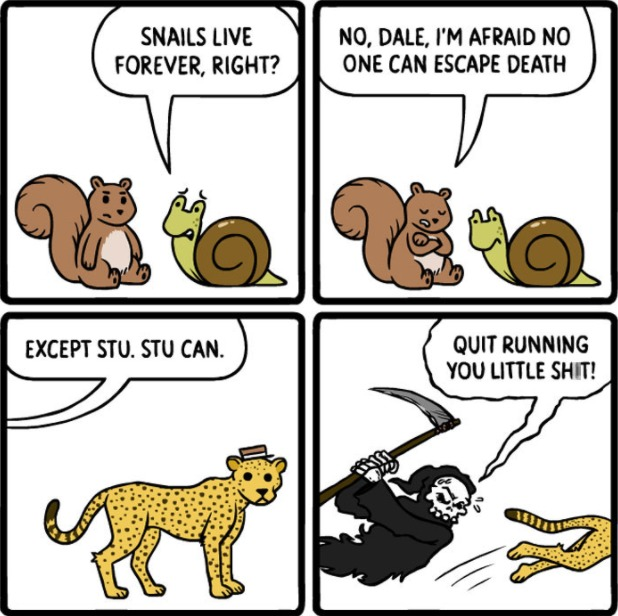go cheetah! - meme