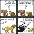 go cheetah!