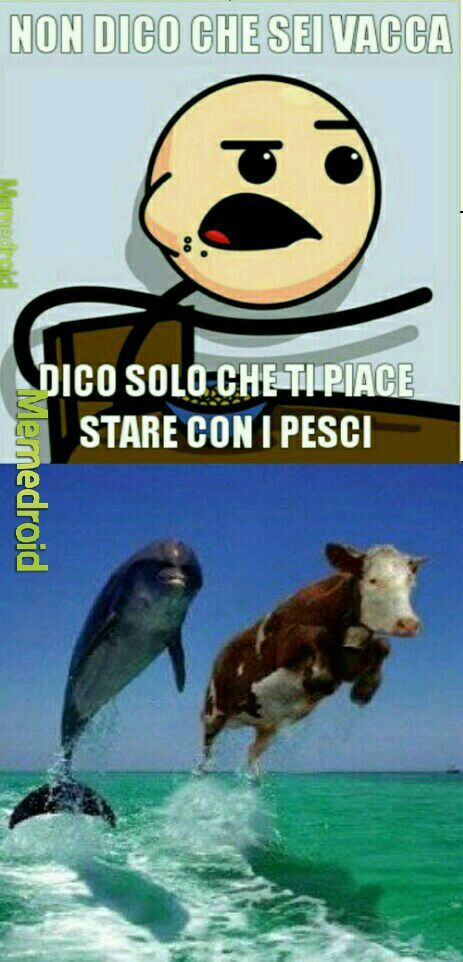 SPERO PIACCIA - meme