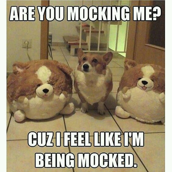 Dog is being mocked - meme