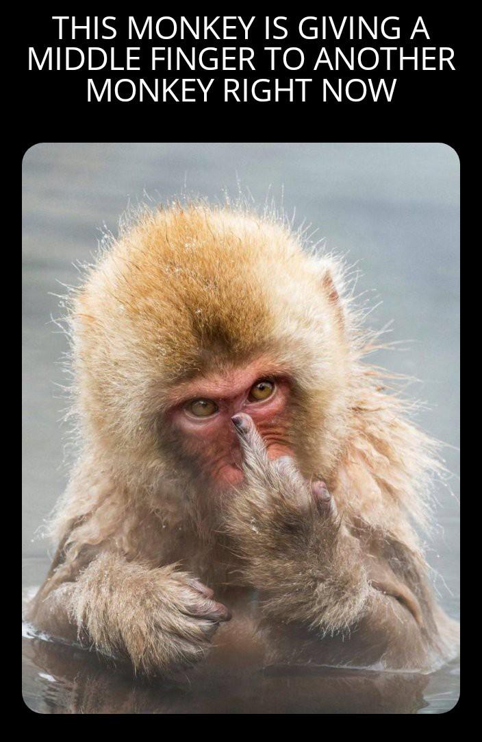 Are you that monkey? - meme