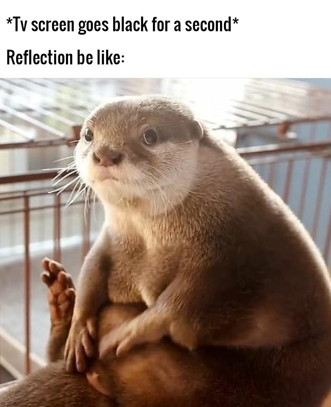 Some wholesome motivational stuff - meme