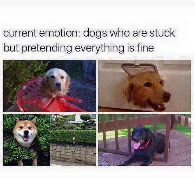 Stuck dogs pretending to be fine - meme