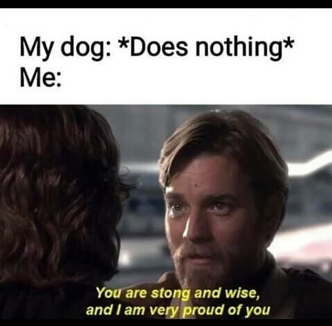 Sorry if a repost 4 - meme