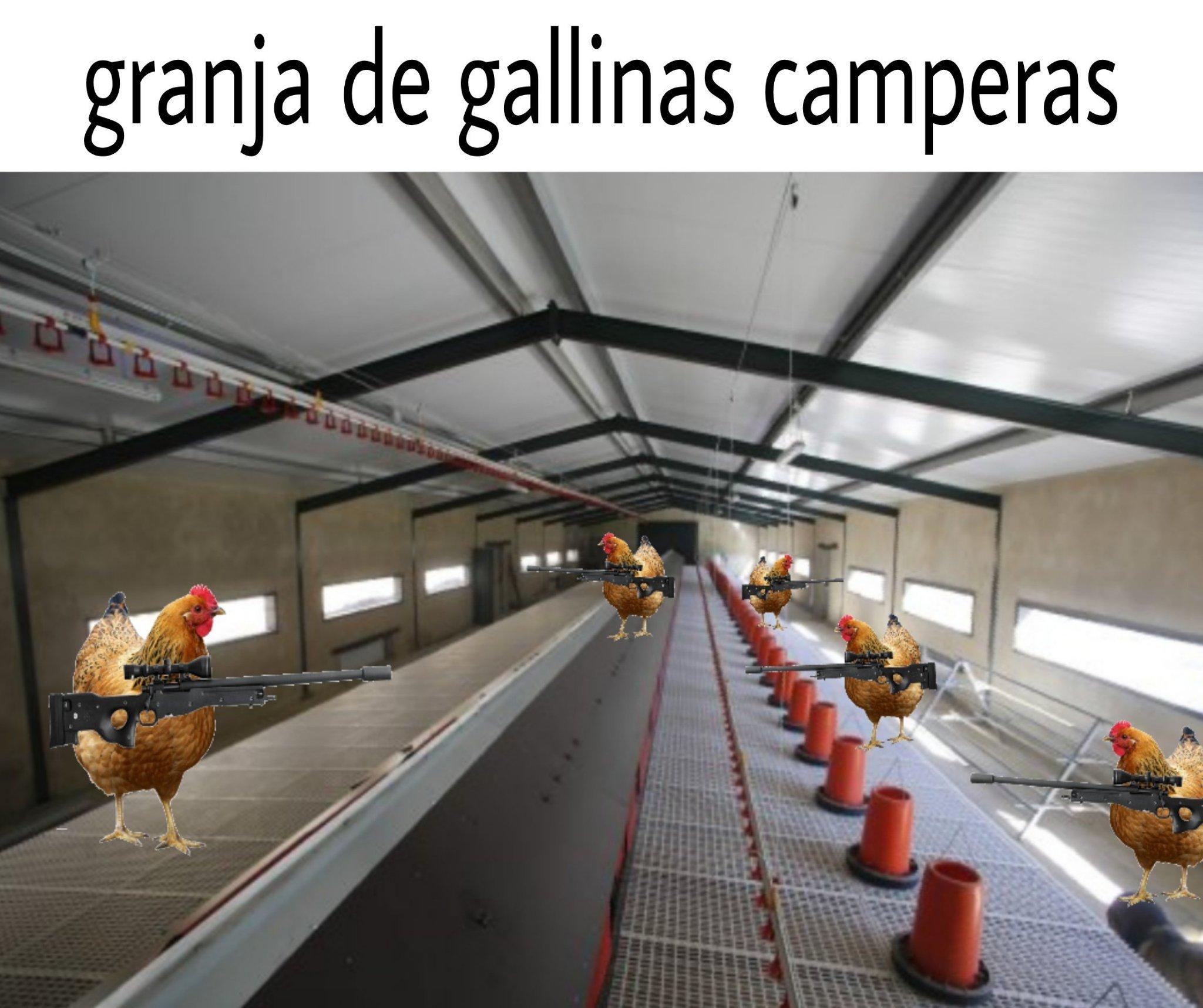 Ptos camperos - meme