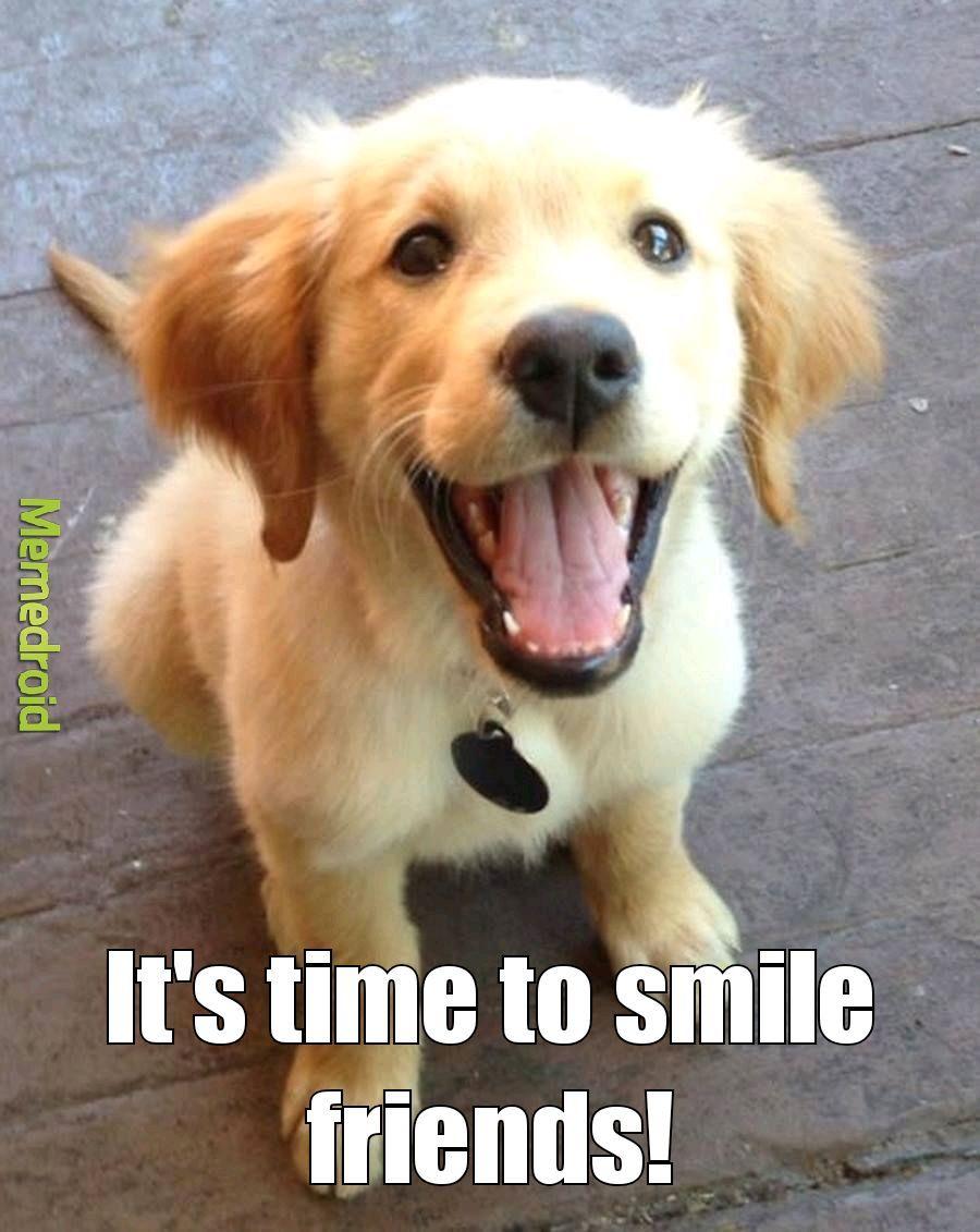 Smile puppy - meme