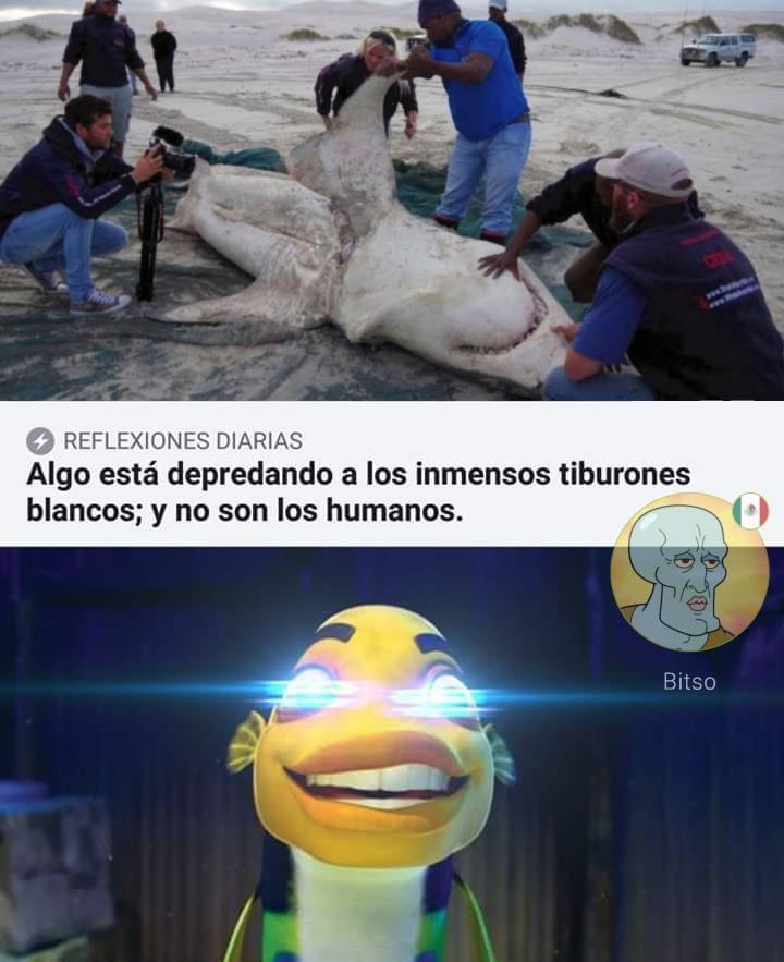 El espantatiburones :v - meme