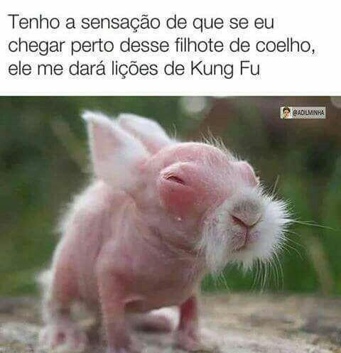 Aposto que é do mesmo universo que kung fu panda - meme