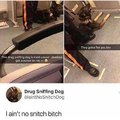 Drug sniffing dog aint no snitch