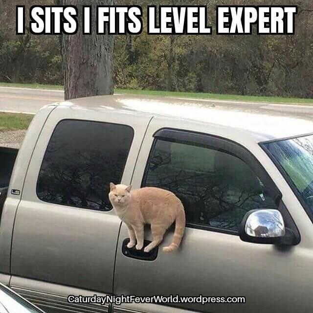 he sits he fits expert - meme