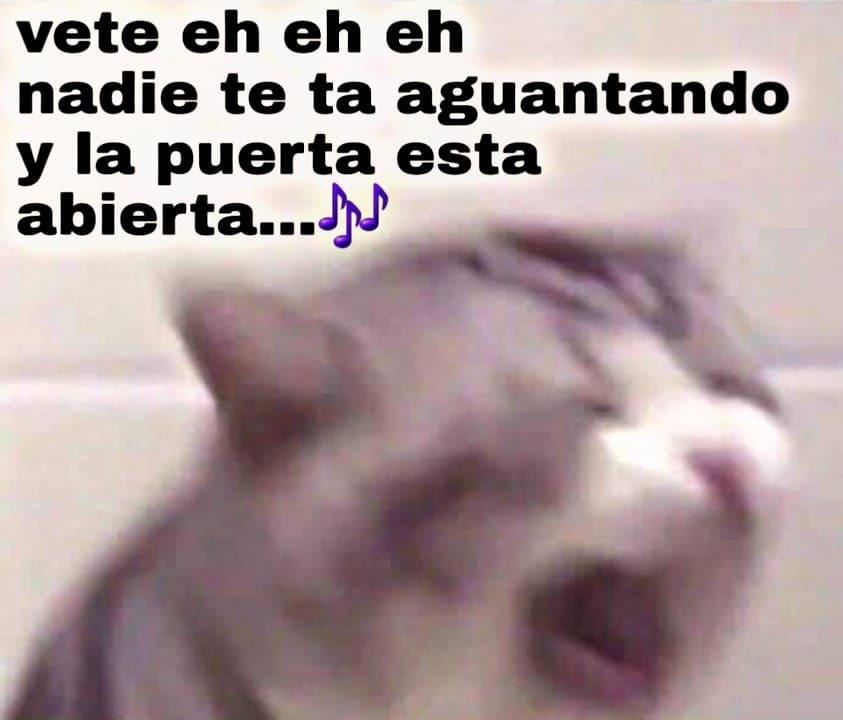 *baila a un ritmo notorio* - meme
