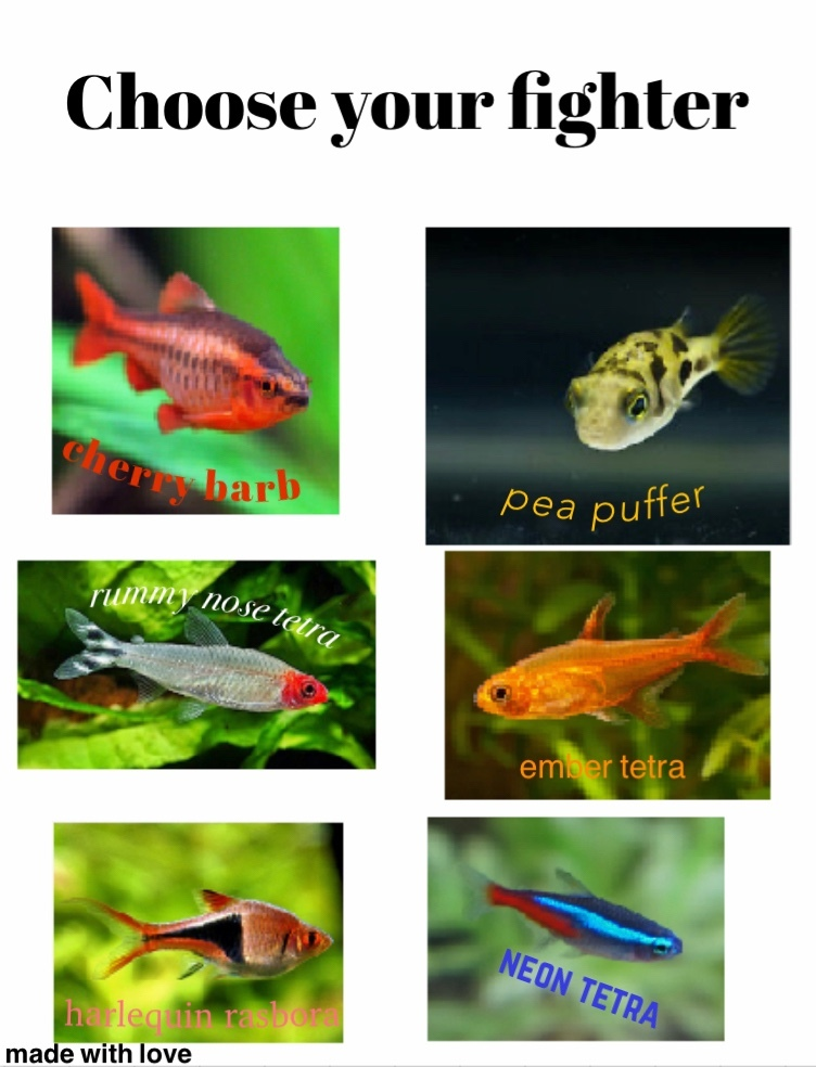 Since you like fish so much - meme