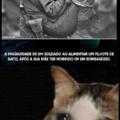 Salve os gatos
