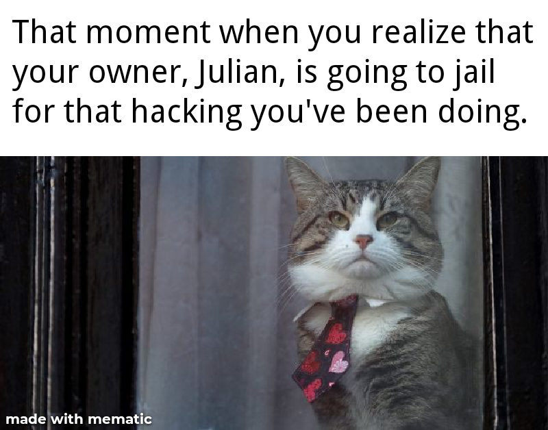 Julian Assange's cat. - meme