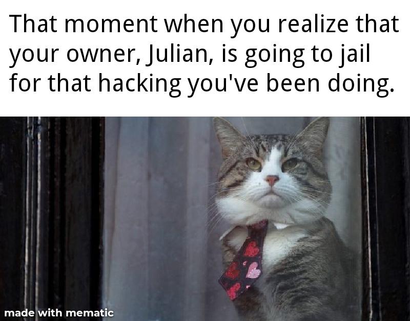 Julian Assange's cat. - meme