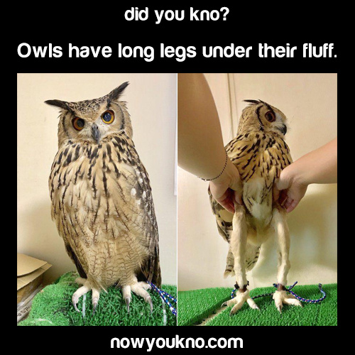 owls - meme