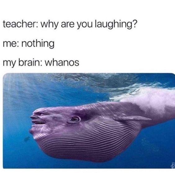 Whanos - meme