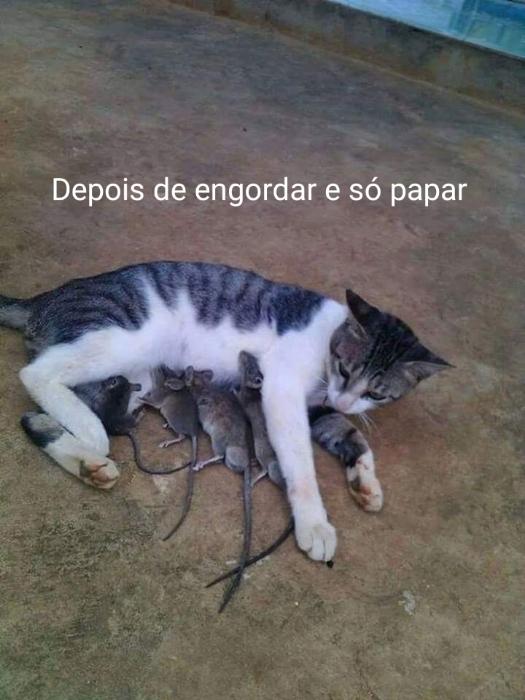 Malandro e o gato - meme