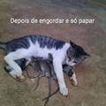 Malandro e o gato