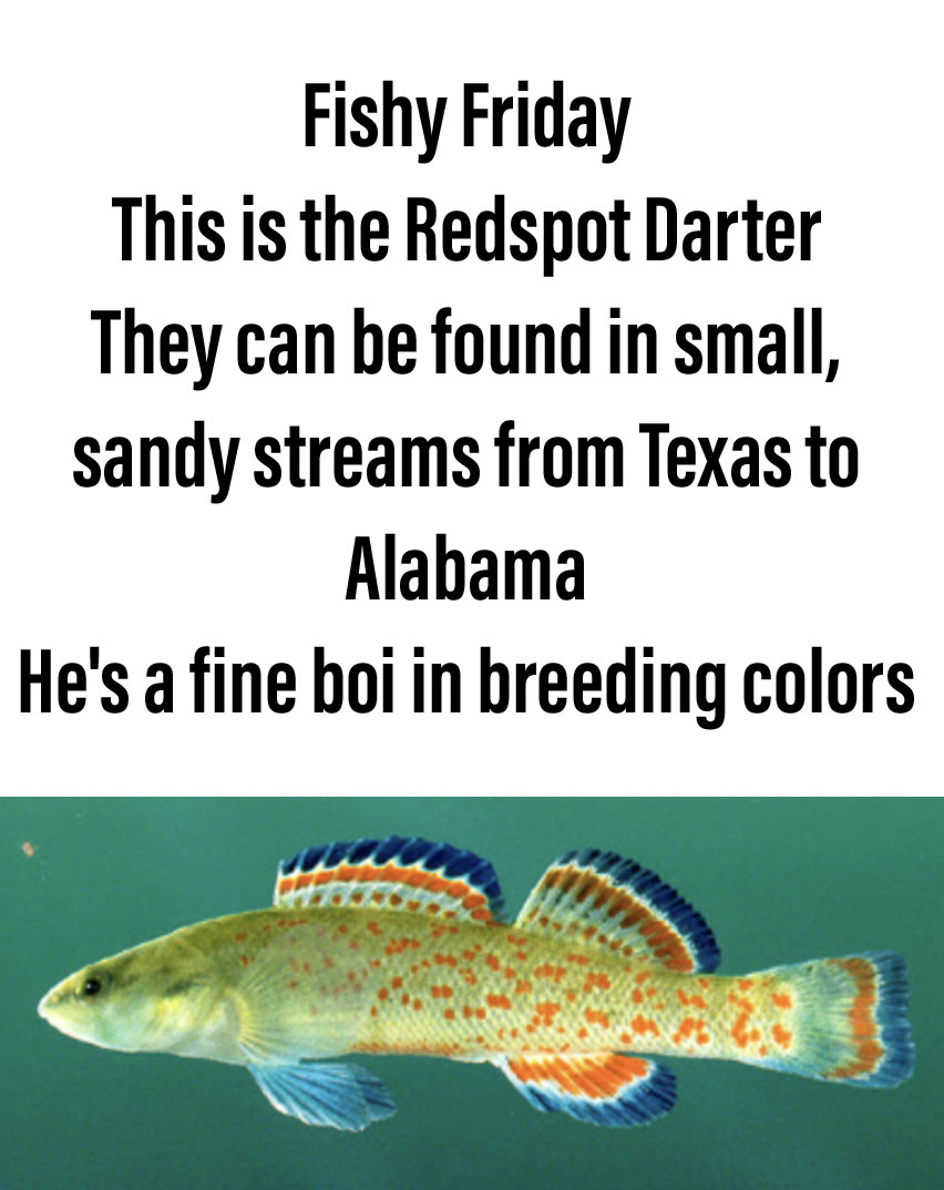 Freshwater Biodiversity - aquariums suck compared to healthy rivers and streams - meme