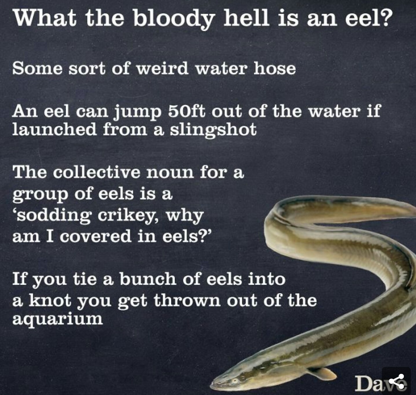 Why am I covered in eels!? - meme
