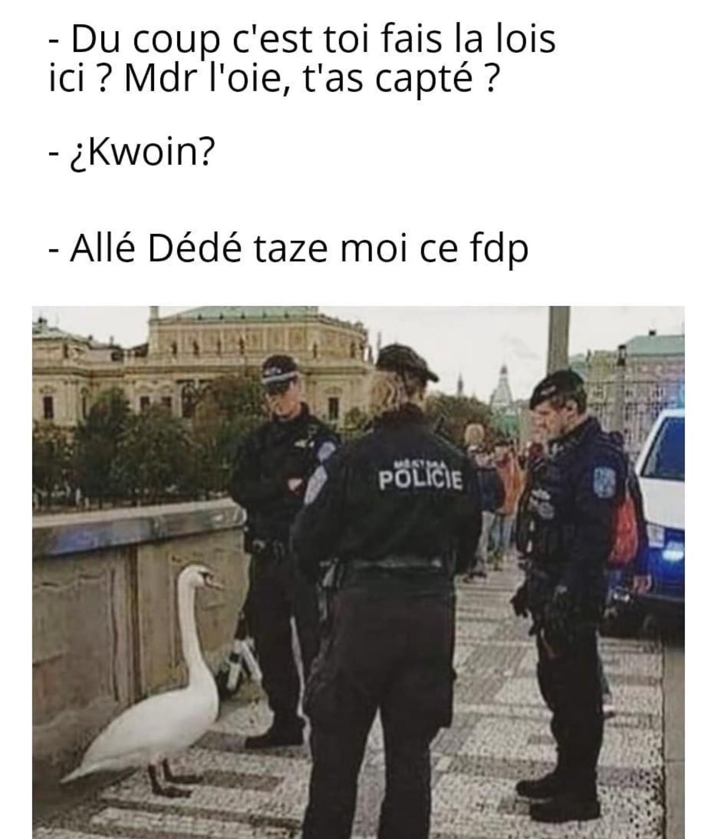 Quoin - meme