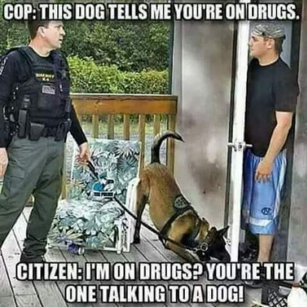 How high is the dog...?? - meme