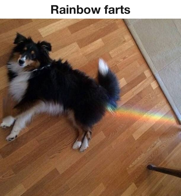 must have gotten into a bag of skittles - meme