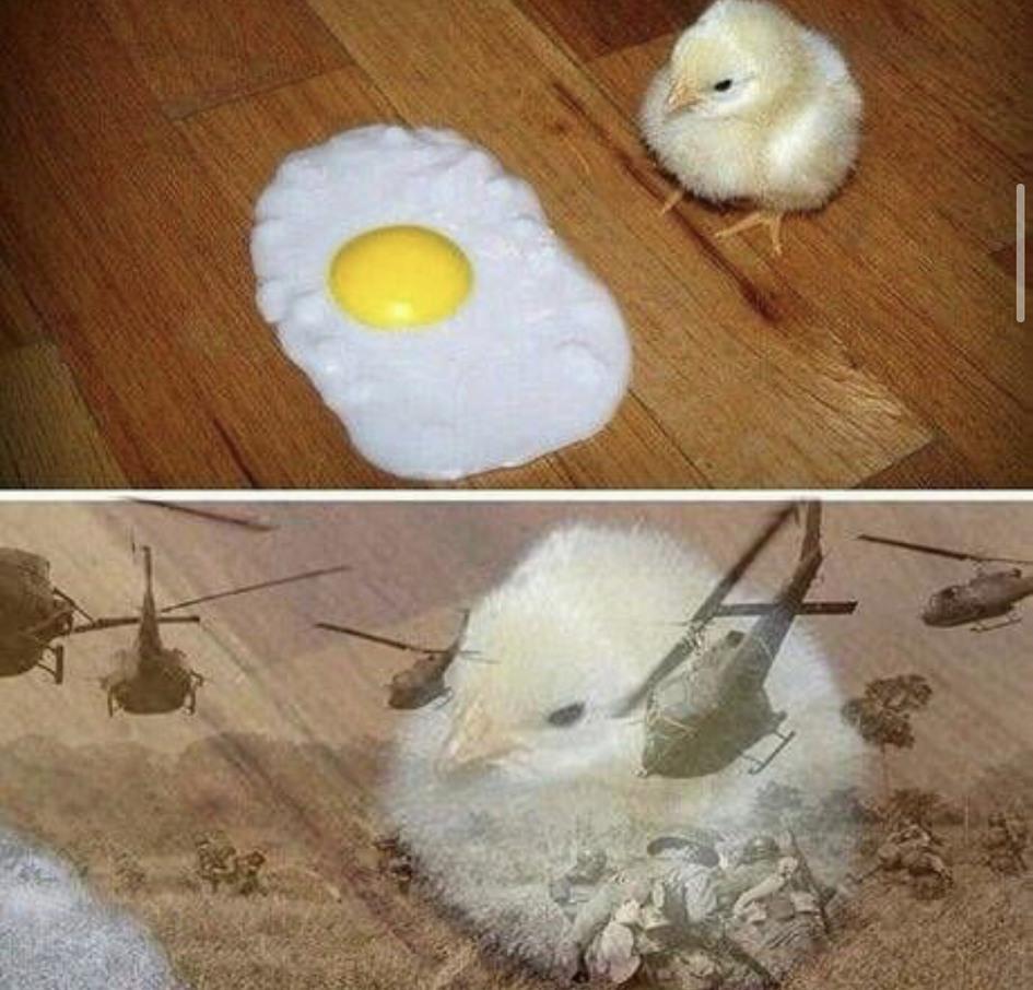 Pobre pollo - meme