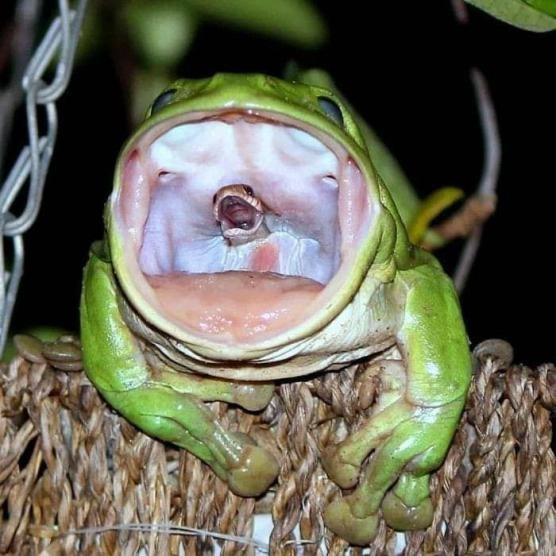 Para mi los reptiles y anfibios son animales que no parecen pertenecer a la tierra. - meme