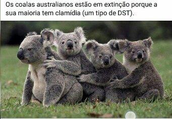 Deve ser horrível ser um coala - meme