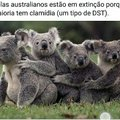 Deve ser horrível ser um coala