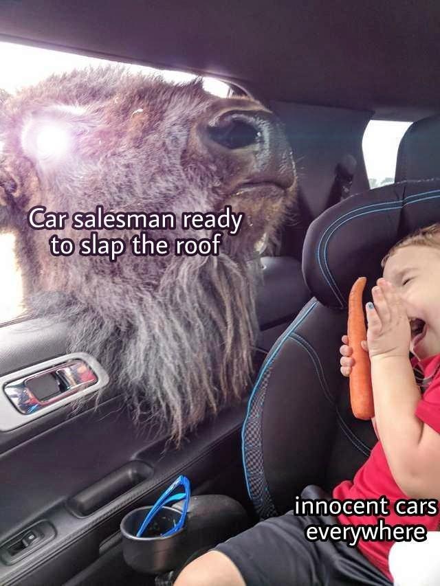 Thicc bison boi - meme