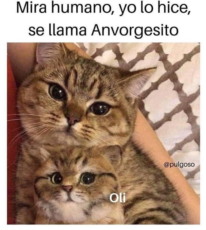 So cute - meme