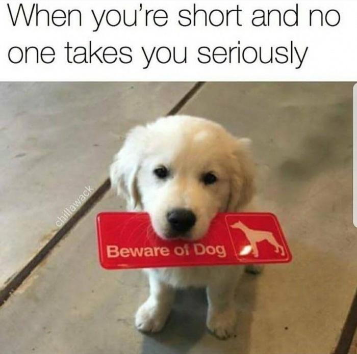 short people probs - meme