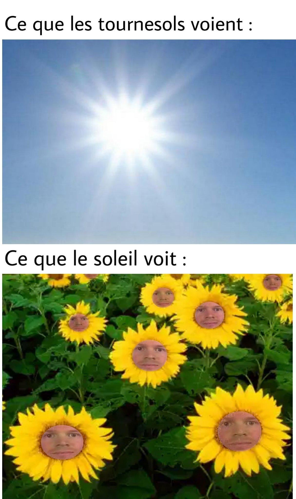 Soleil - meme