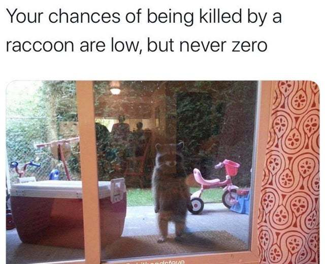 Your chances of being killed by a raccoon are low but never zero - meme