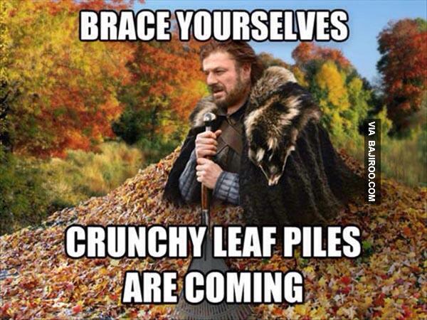 Leaves everywhere - meme