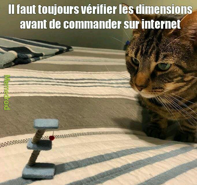 Il faut toujours vérifier les dimensions avant de commander sur internet. - meme